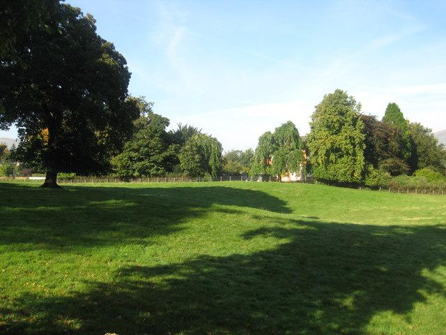 Pasture in Lamington