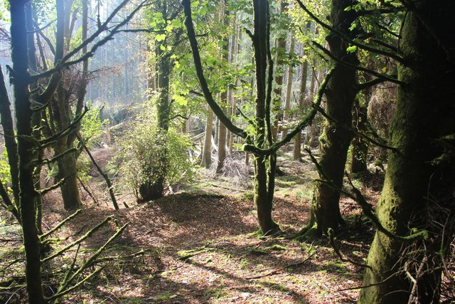 Sunshine penetrates the woods on The Tom