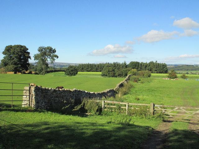 Fields near East Witton
