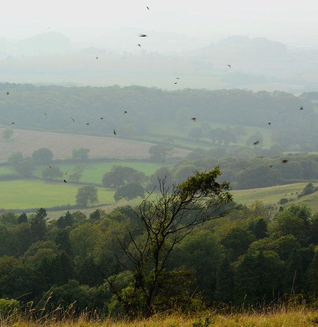 The Swallow Tree, Eggardon Hill, Dorset