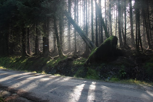 Dense forest filters the sun on Kilbride Hill