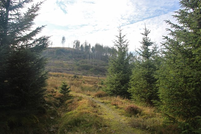 Forest walk leading to Bealach Gaothach