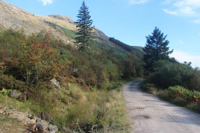 Forest road in Glen Massan