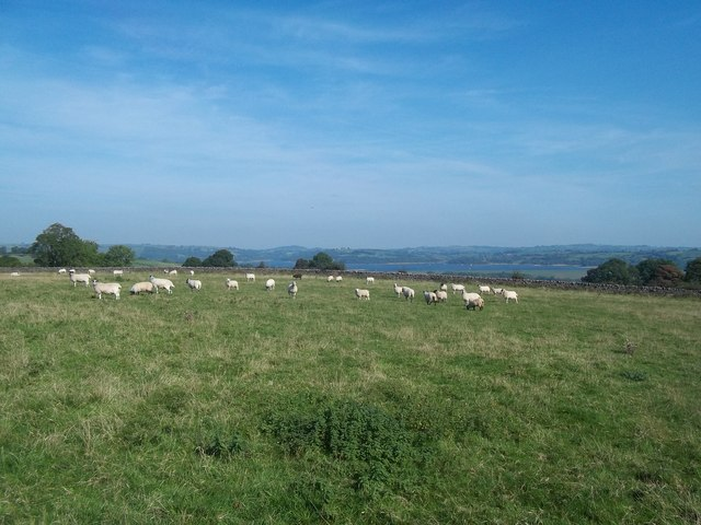 Livestock Grazing near Madge Hill