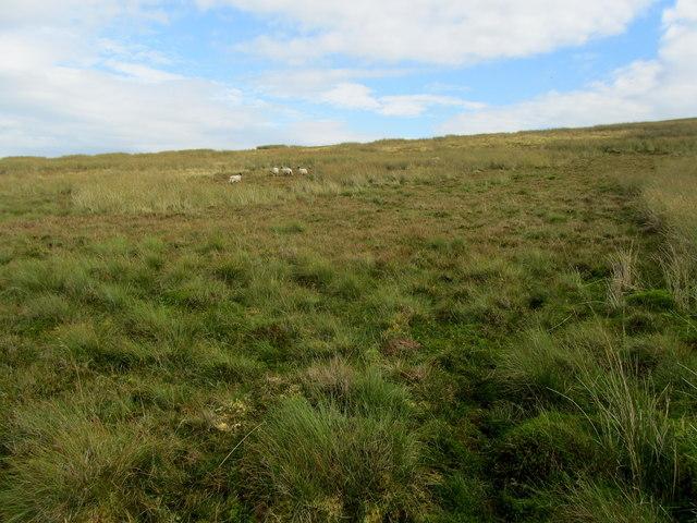On Hindlethwaite Moor