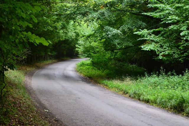 Lane towards West Dean