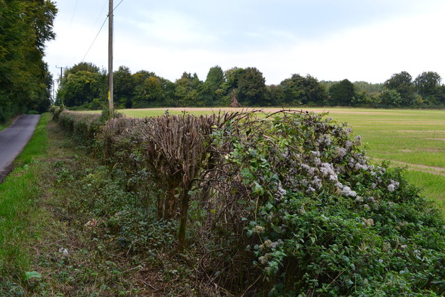 Roadside hedgerow