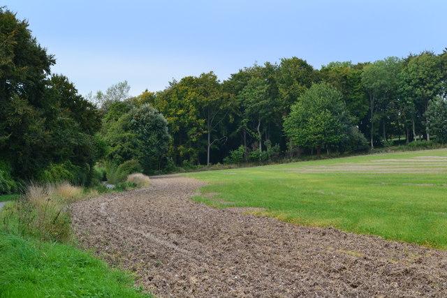 Roadside field near Warren Farm