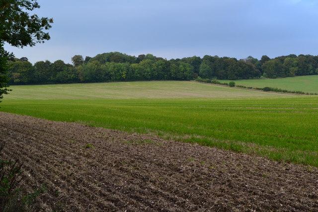 View across fields towards Kent's Wood