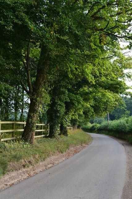 Trees beside lane near Warren Court Farm