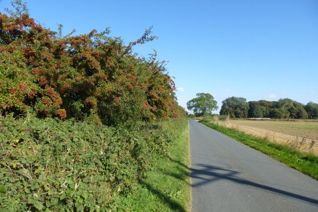 Hawthorn hedgerow