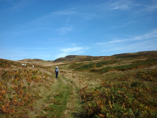 Track on Brown Knott (2)