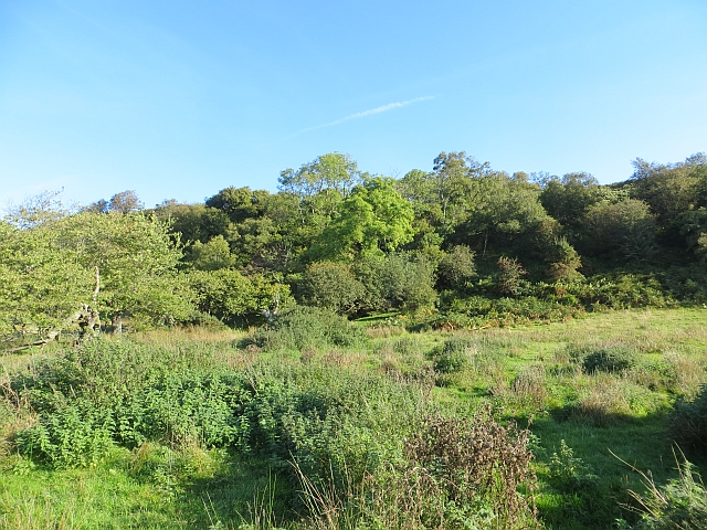 Woodland beneath Lenihall