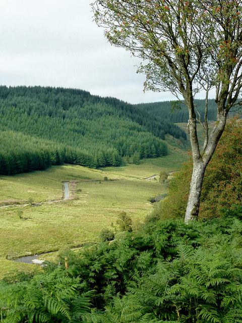 Cwm Tywi north of Dolgoch, Ceredigion