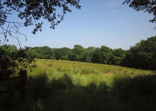Field south of Thornham Chapel