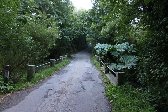 Bridge with huge wild rhubarb