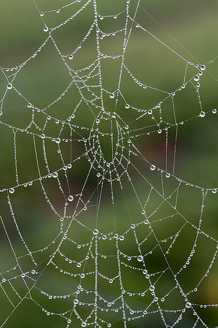 A spider's web at Bemersyde