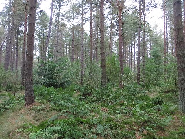 Woodland, Annsmuir