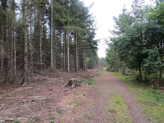 Heatherhall Wood