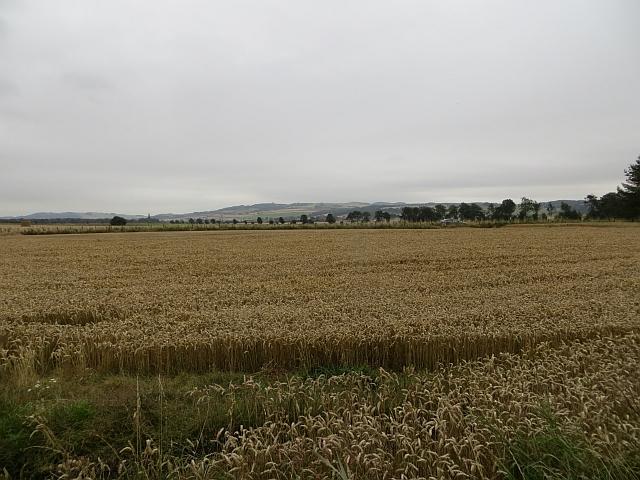 Wheat, Drumtenant