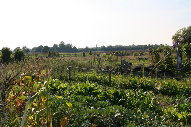 Allotments in East Winch