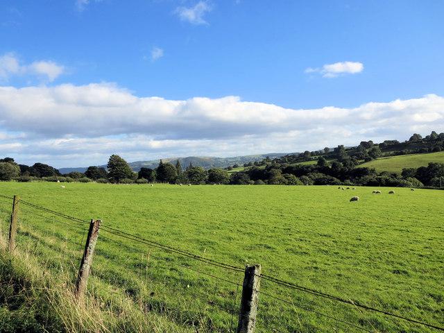 Sheep pasture east of Tan y Ffordd Ochor