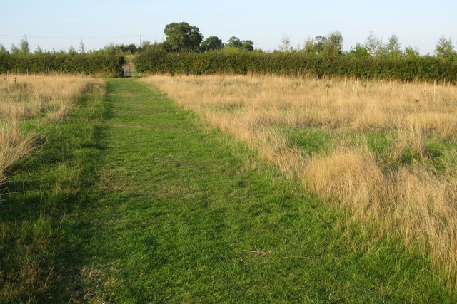 Path towards Wiles Wood