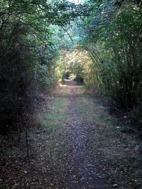 Path towards Elm Farm