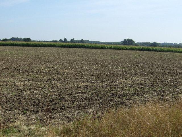 Crop field near Thornton Lodge Farm