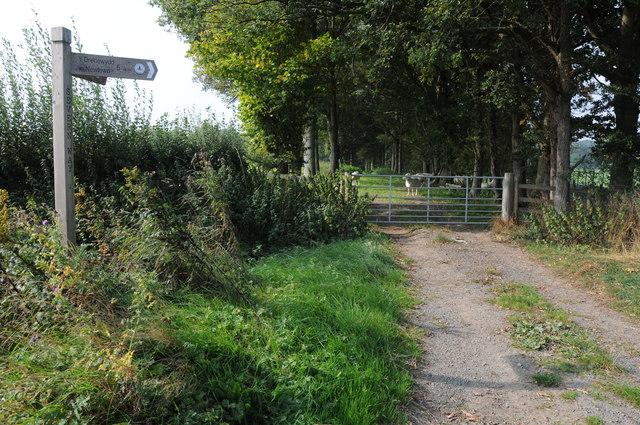Severn Way, near Bwlch-y-Ffridd