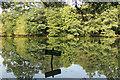 SK9469 : Hartsholme Lake : Week 40
