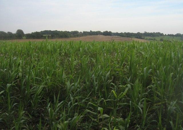 Farming east of Halves Wood