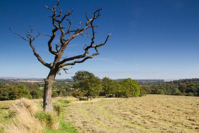 Skeletal tree near Gathurst