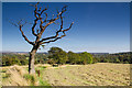 SD5207 : Skeletal tree near Gathurst : Week 39