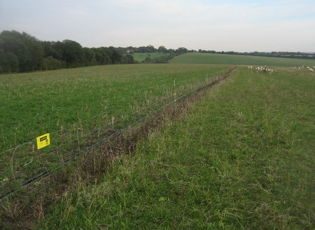 New fencing for grazing management