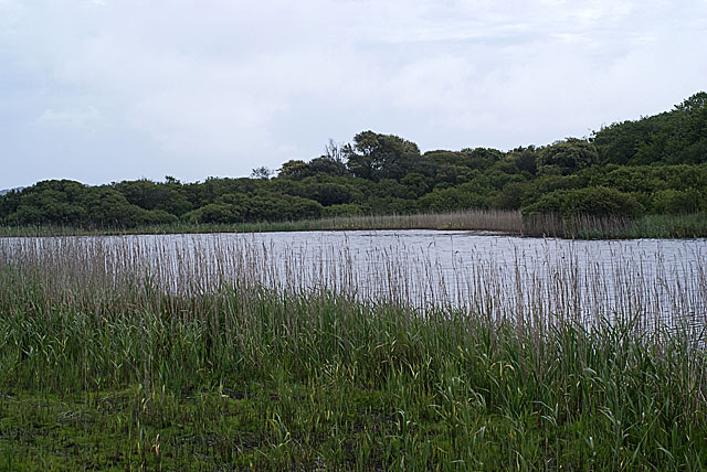 Tresco Great Pool from the Western Hide