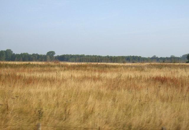 Rough ground near Kebwood Farm