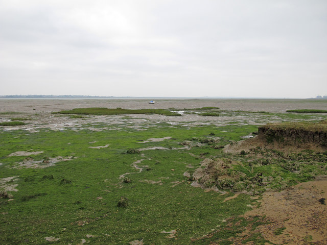 Seaweed and mudflats, St Lawrence Bay