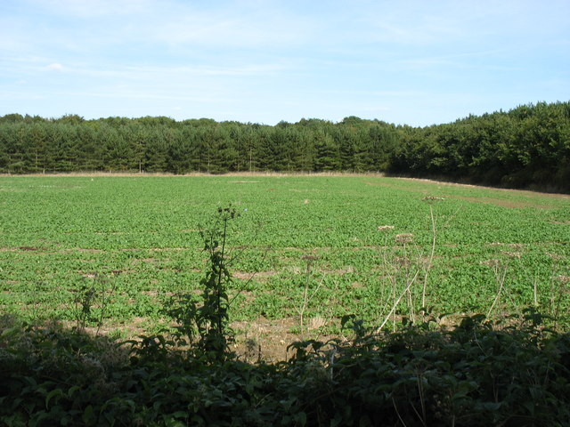Farmland and woodland at Acreland Farm