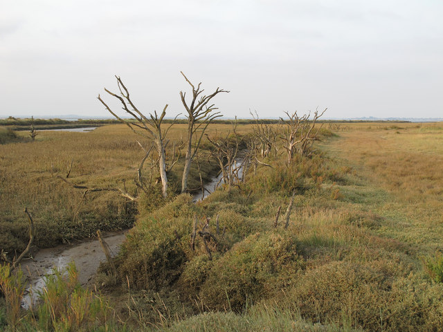 Dead trees in the salt marsh