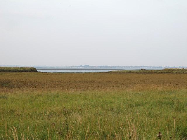 New saltmarsh near Bradwell Creek