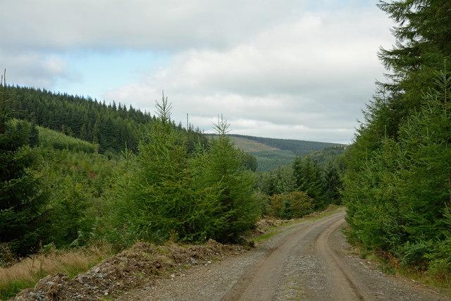 Forestry road in Penllyn Forest
