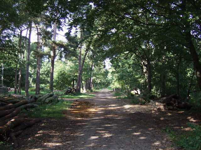 Track into Fulsby Wood