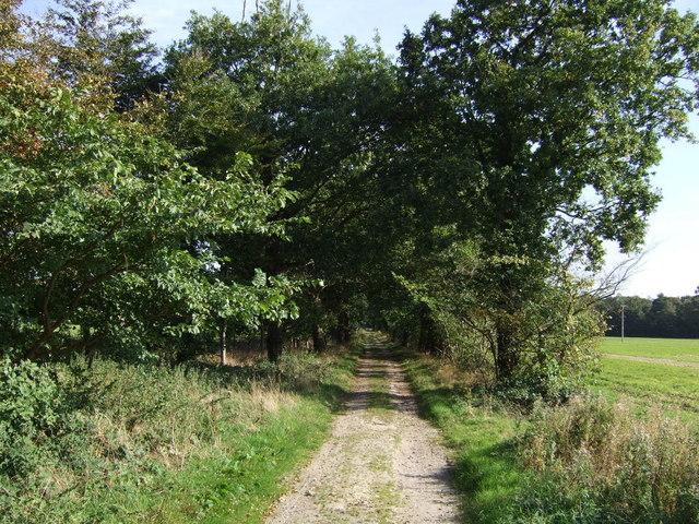 Track off Tumby Lane