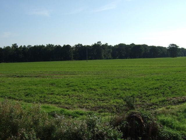 Farmland off Tumby Lane