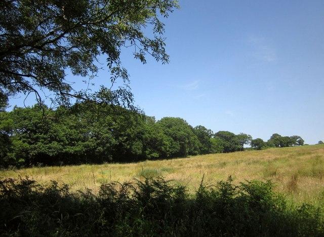 Field by Town Moor Bridge