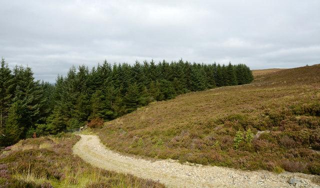 Road leaving Penllyn Forest