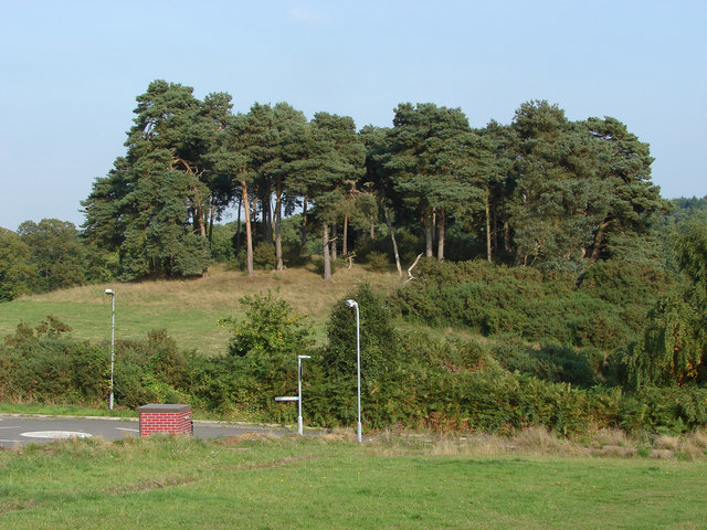 Pine covered knoll