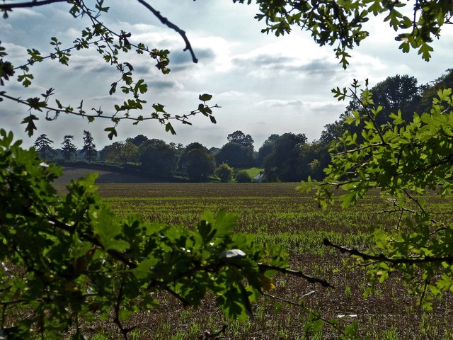 Beechwood farm and fields from Drayton Wood
