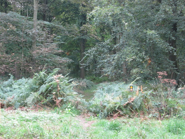 Barnsley Boundary Walk in Margery Wood